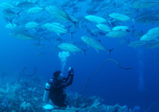 sebu2013 - 2522ギンガメ